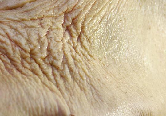 kunst jas mensenhuid leer dier product